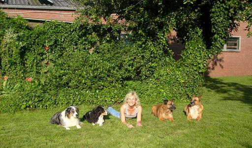 mit meinen Hunden
